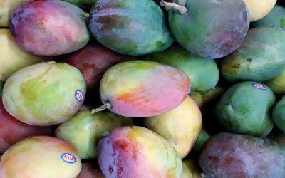 Mango season is here